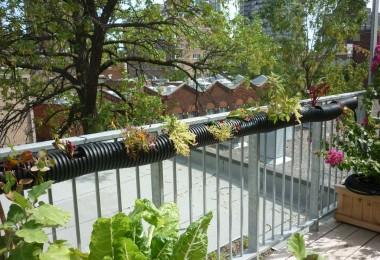 montreal-urbanecology-roof