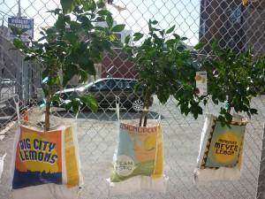 fruit fence