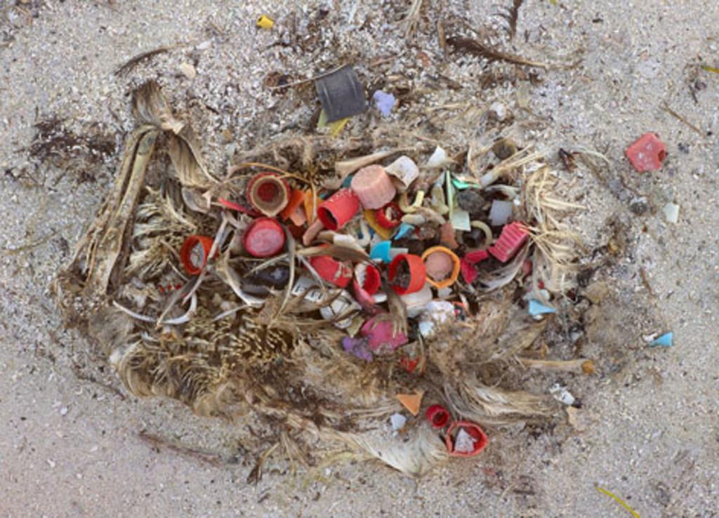 marine-debris-beach-midway-credit-chris-jordan_472